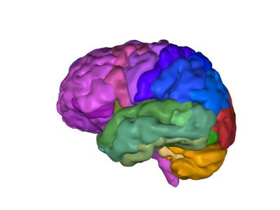 TJs Biomedical Imaging - 3D PDF - Lobes grouped by color
